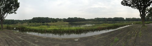 Panorama View of Waterfowl lake, Showa Memorial Park, Tokyo, Japan