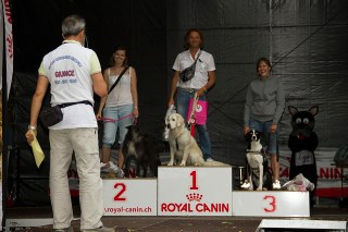 Sport Acquatici Cinofili - Splash Dog a Lugano