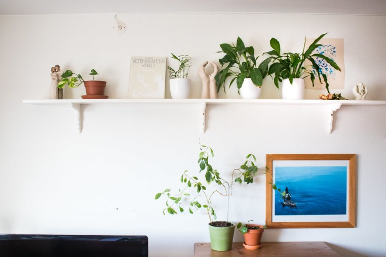 Växter - reaktionista.se