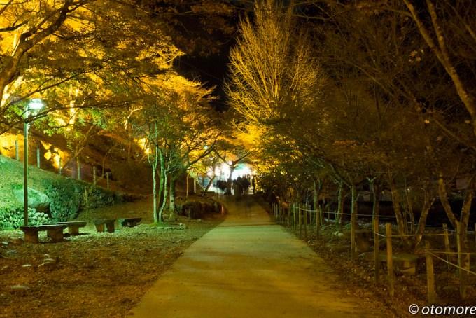 香嵐渓ライトアップ4