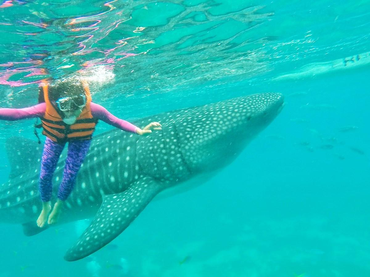 Whale shark watching, Oslob