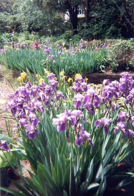 Photo Tour Rodef Shalom Biblical Botanical Garden