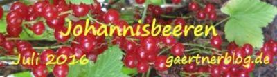Garten-Koch-Event Juli: Johannisbeeren [31.07.2016]