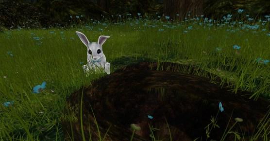 rabbit_001
