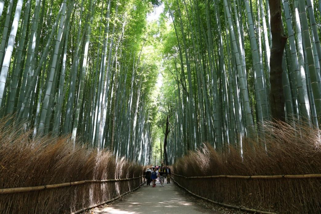 2015 April 京都嵐山 340