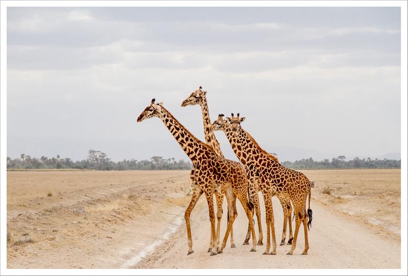 Amboseli-26