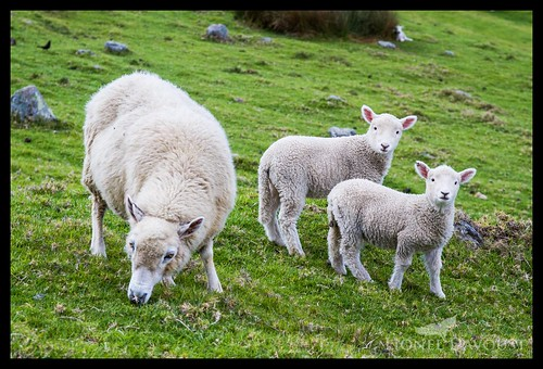 The Speaking of the Lambs