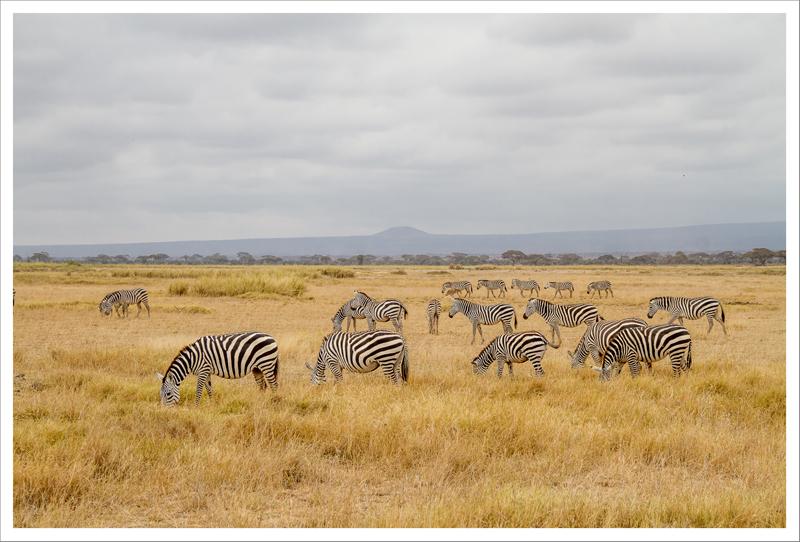 Amboseli-94