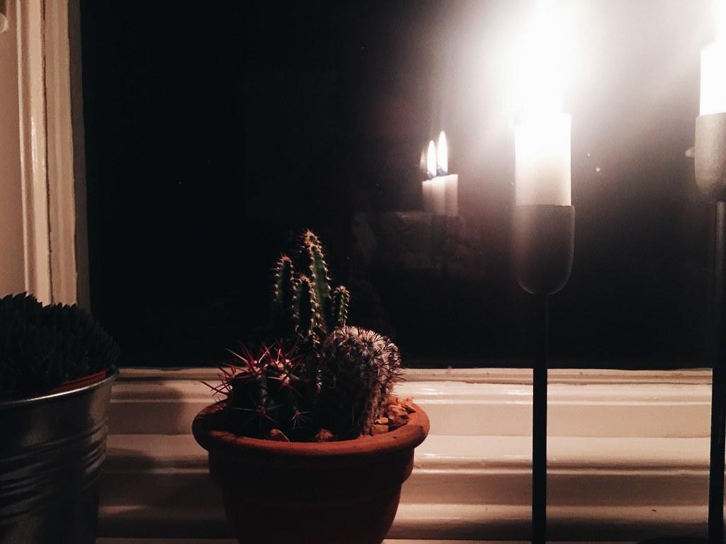 cactus candle cozy window