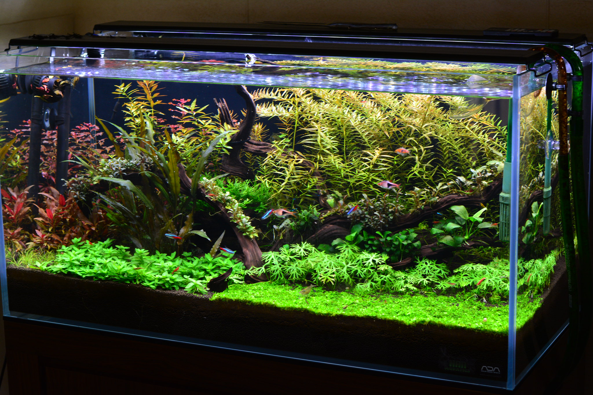 Carpeting Question The Planted Tank Forum & Low Tech Planted Tank Led Lighting | Decoratingspecial.com azcodes.com