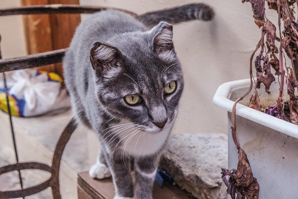 gatto proprietario sito di incontri