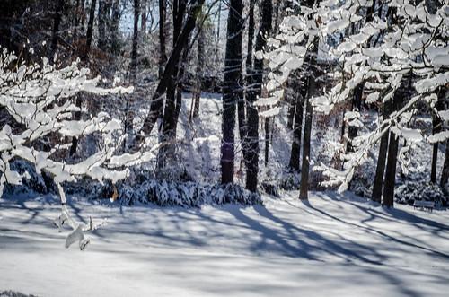 Greenville Snow