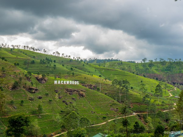 Tea Plantation - Nuwara Eliya, Sri Lanka.jpg