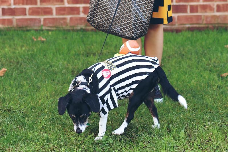dog football rufferee, referee, halloween costume
