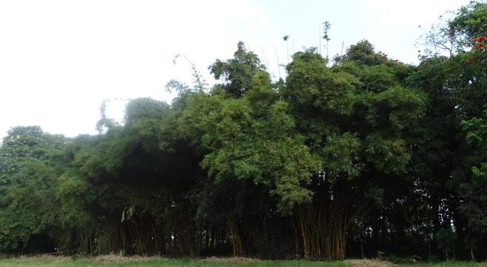 Naturaleza arboles Hacienda La Danesa Naranjito Ecuador 01
