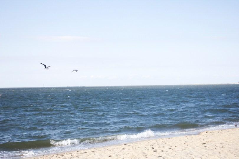 delaware-lewes-beach-lighthouse-seagulls