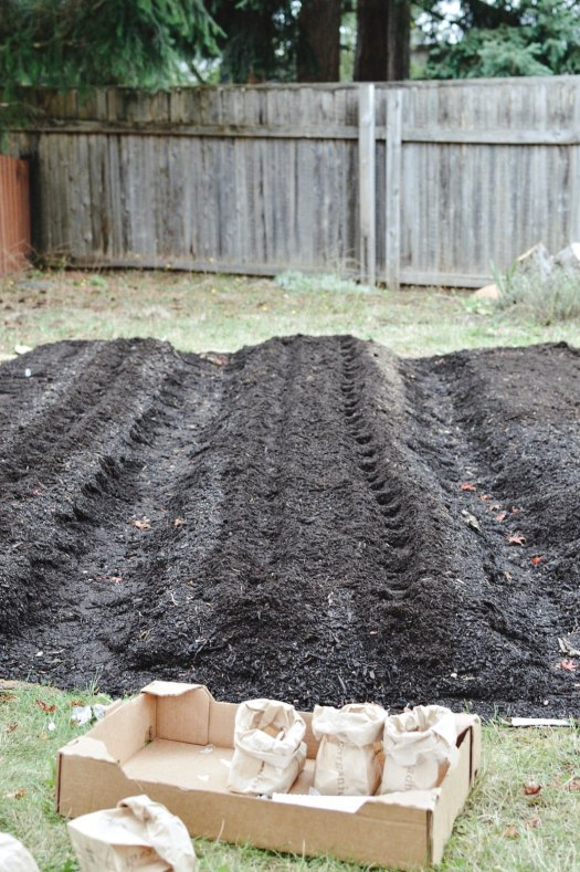 Garden beds ready for planting