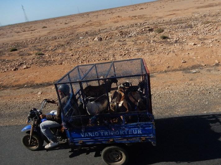 Touristes en excursion dans le désert :D
