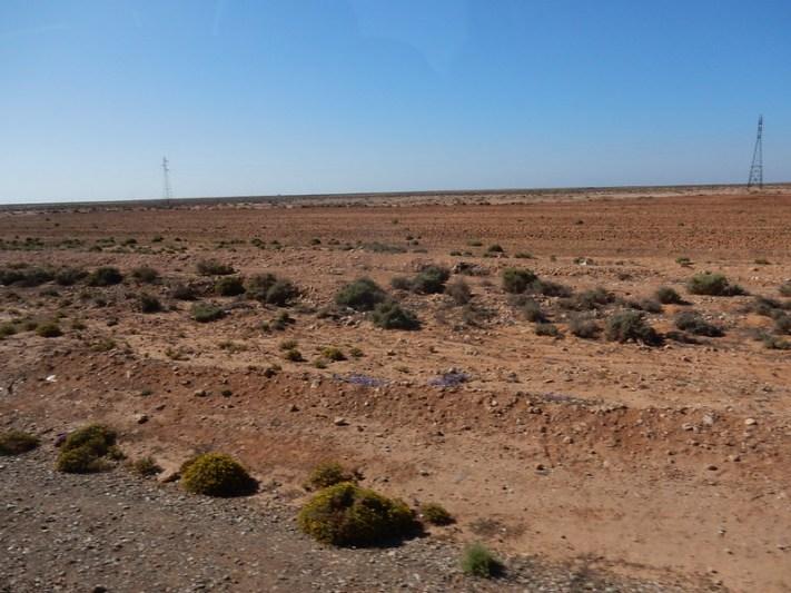 l'indigo pousse dans le désert