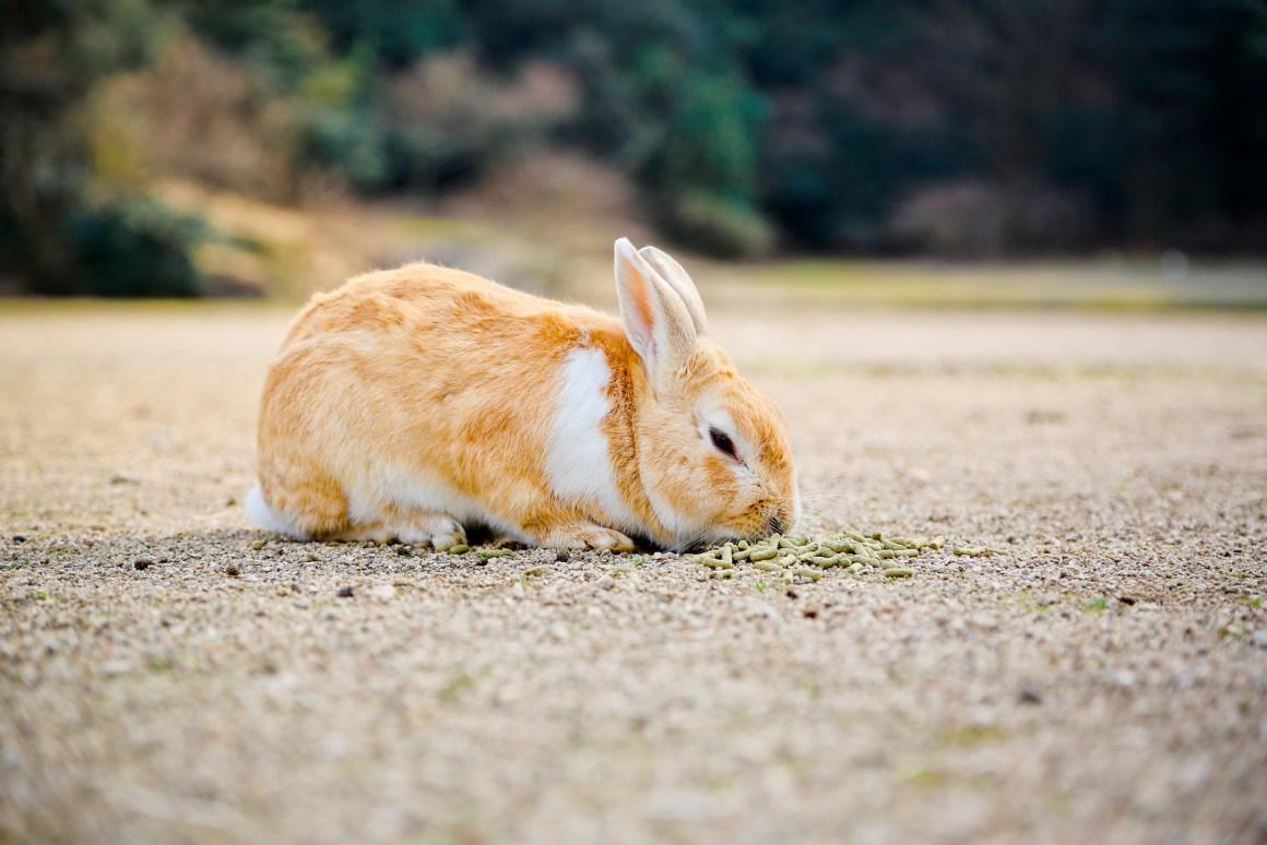 大久野島兔子島 Hiroshima 191