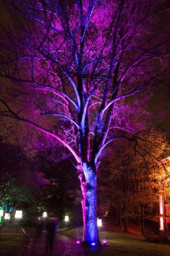 lumière arbre
