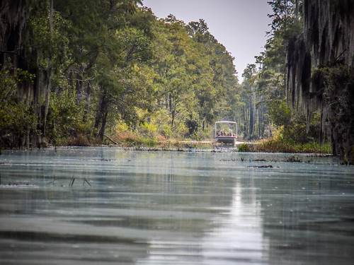Lowcountry Unfiltered at Okefenokee-257