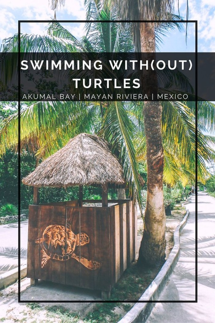 Swimming With / Without Turtles in Akumal Bay, Mexico