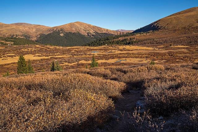 Trail Through Willows