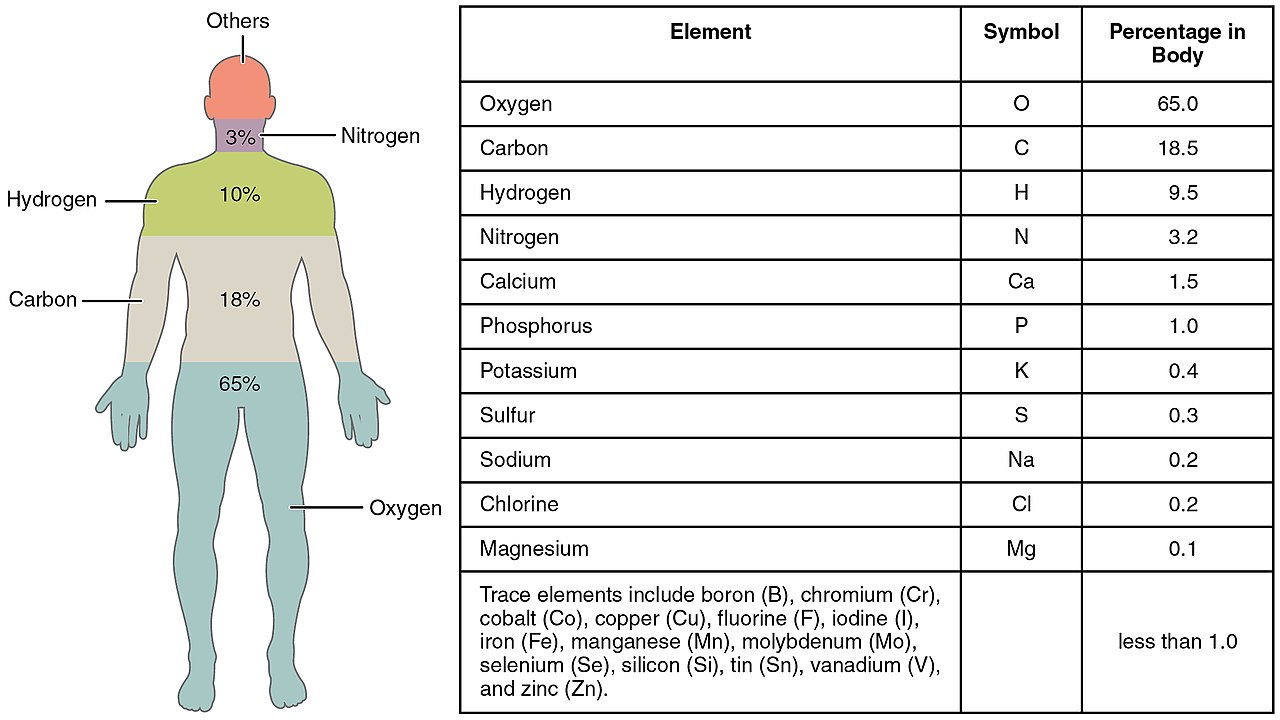1280px-201_Elements_of_the_Human_Body-01