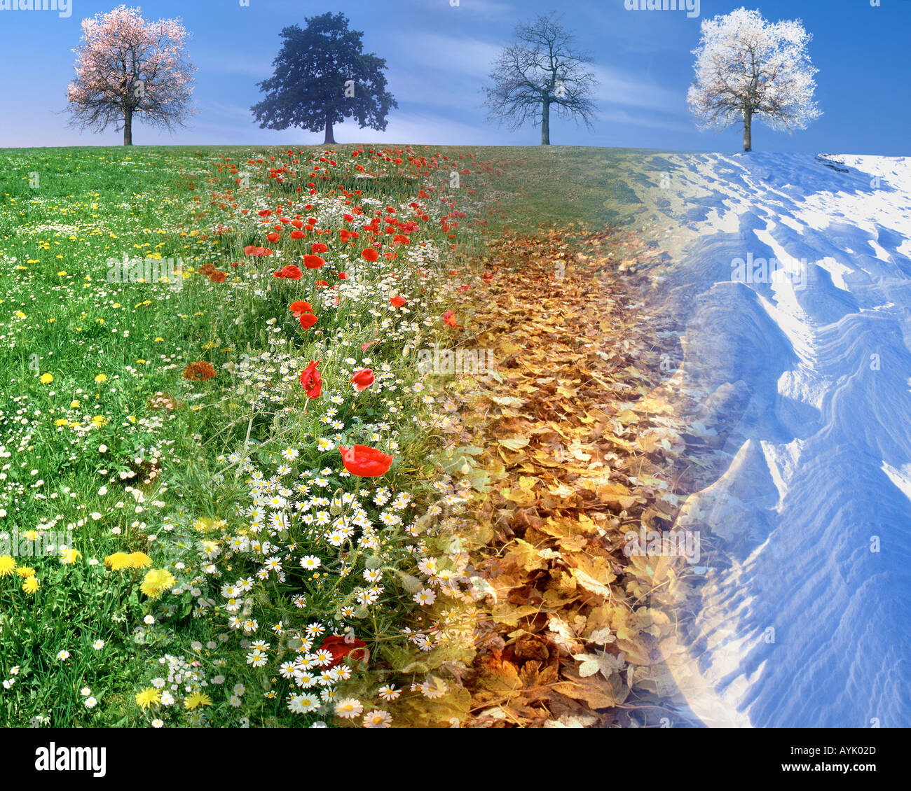 Concept Photography The Four Seasons Combined In One