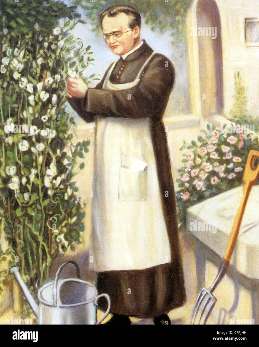 Gregor Mendel Austrian Friar And Scientist Who
