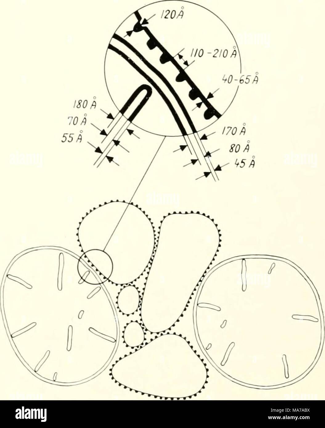 Fein was ist schematisch bilder der schaltplan greigo
