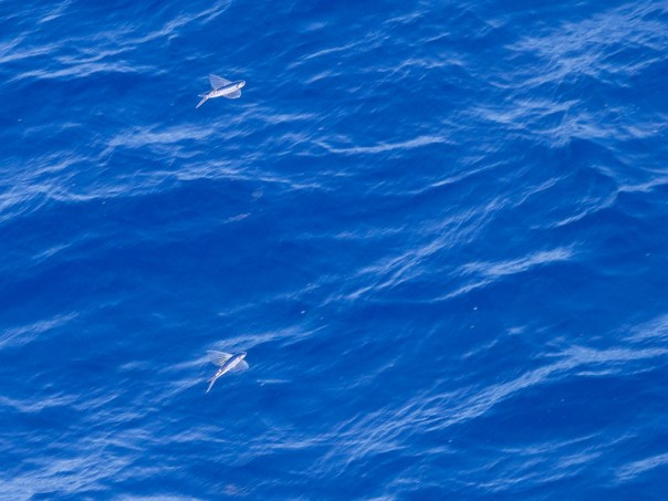 A closer look at the Flying Fish