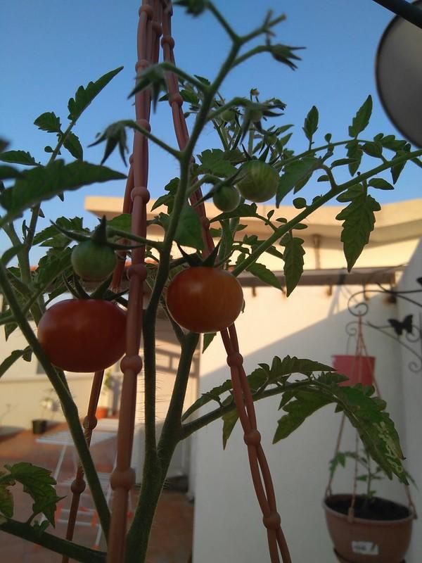 Best Vegetables Balcony Garden