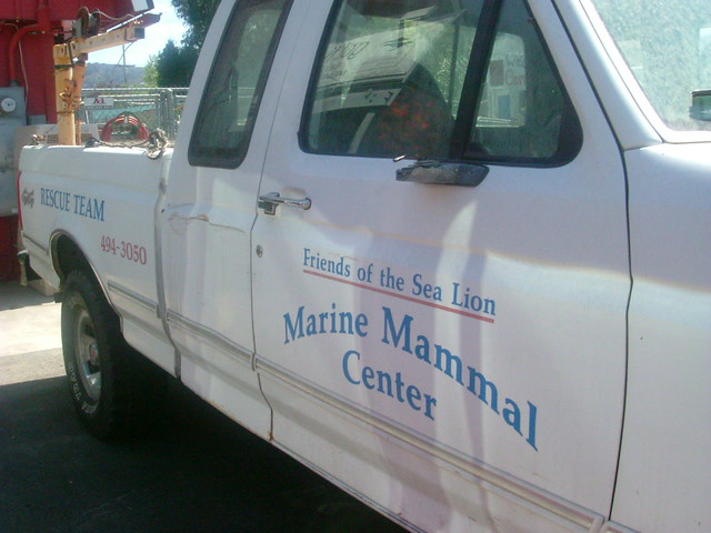 Marin Manmal Center (2007)