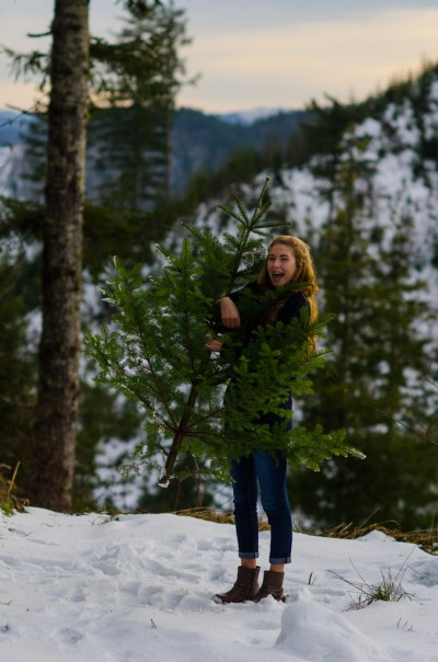 high elevation noble fir tree