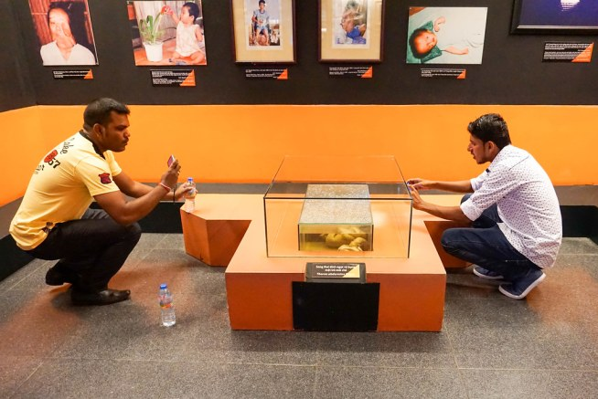 Visitors in the War Remnants Museum Take Photos of the Preserved Babies in the Agent Orange Room, Ho Chi Minh City, Vietnam, April 2016