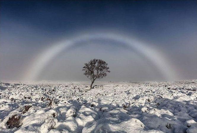 whiterainbow-800x543