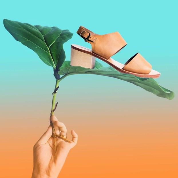 still life with a leaf