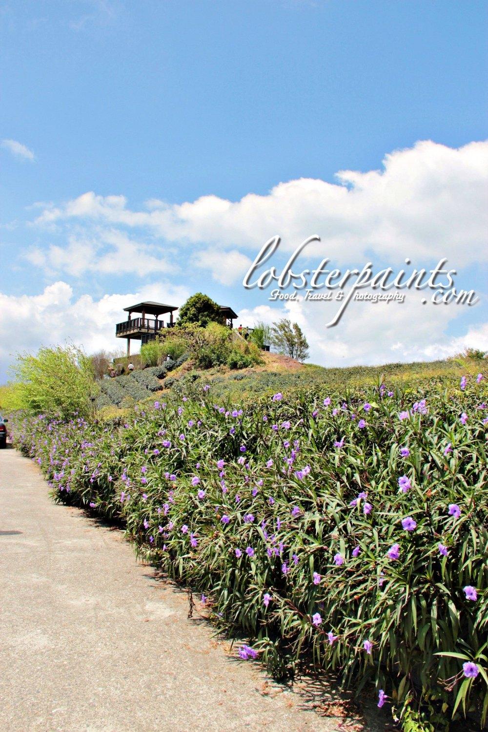 15 September 2012: Sixty Stones Mountain 六十石山 | Hualien, Taiwan