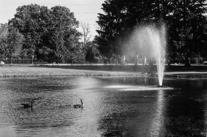 Swans and Fountain