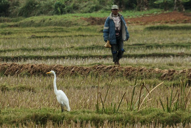 Man and Egret