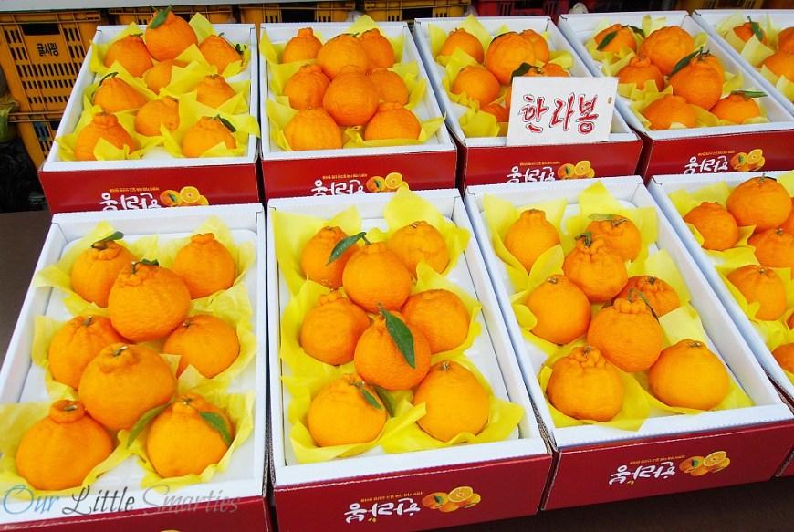 Jeju Tangerine
