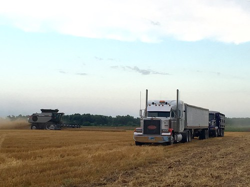 The Gleaner with the trucks.