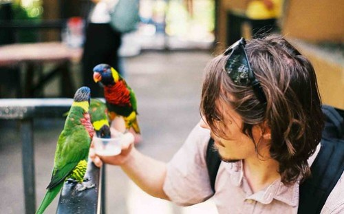 Feeding Parrots
