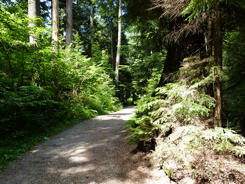 Things to do in Vancouver: Hike Stanley Park