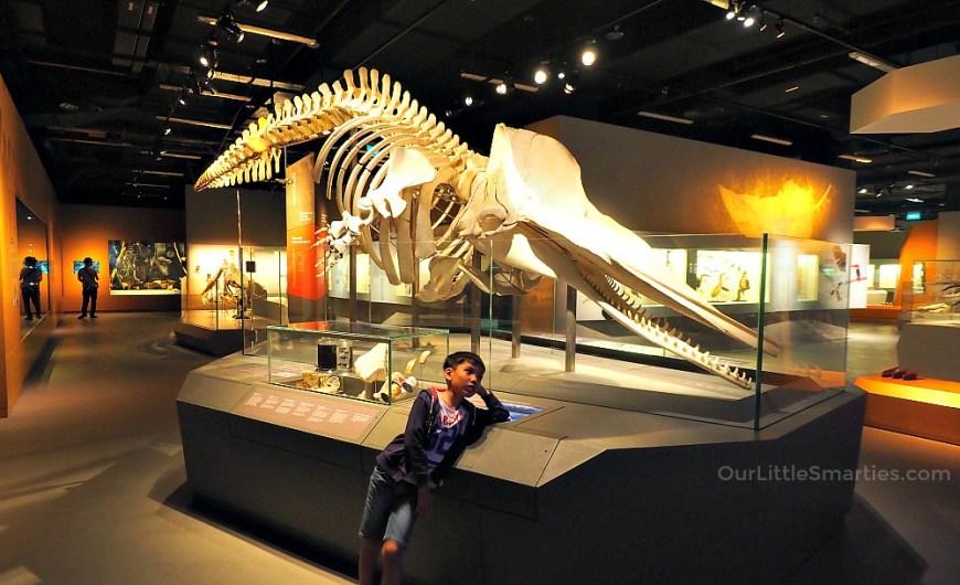 Lee Kong Chian Museum 2