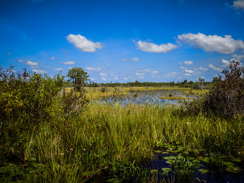Lowcountry Unfiltered at Okefenokee-265