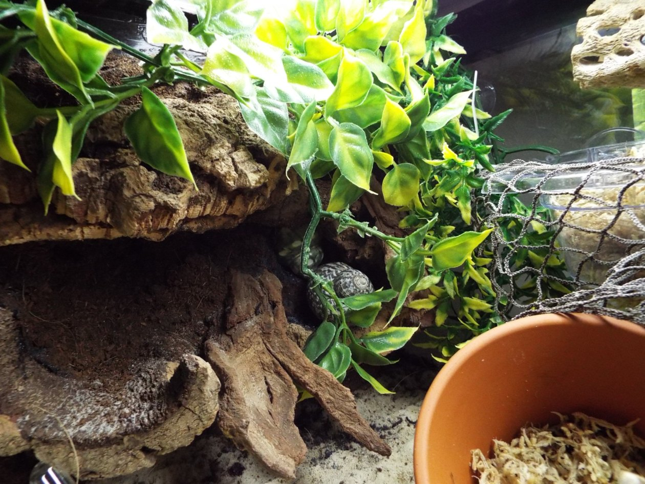 40 gallon breeder update22