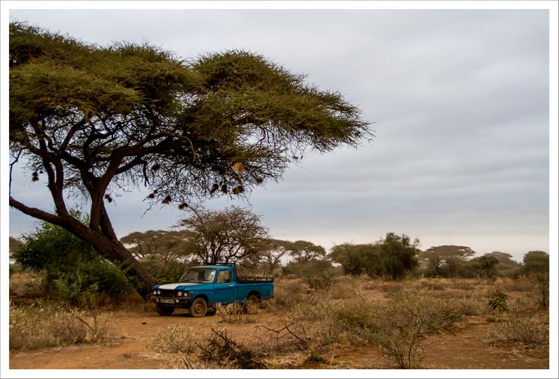 Amboseli-78